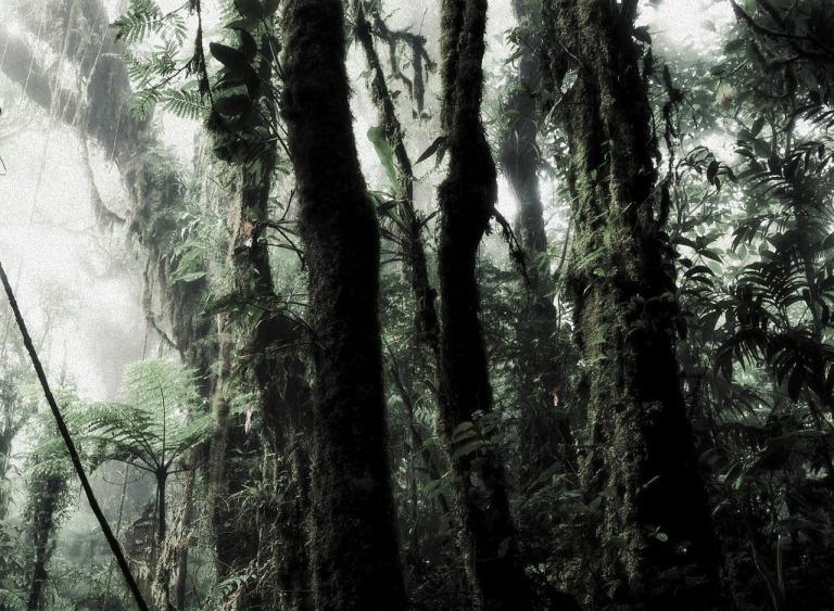 rain-forest-266863_1280